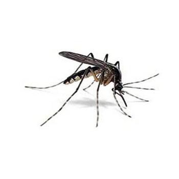 Disinfestazioni ecocompatibili Zanzare